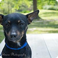 Adopt A Pet :: Little Man - Daleville, AL