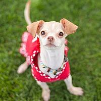 Adopt A Pet :: Kaya-ADOPT Me! - Redondo Beach, CA