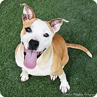 Adopt A Pet :: Champ - Burlingame, CA