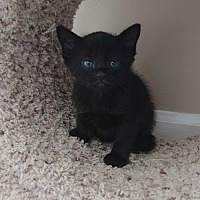 Adopt A Pet :: Rufus - Turnersville, NJ