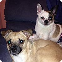 Adopt A Pet :: Annie (NH) & Oliver - Sandown, NH