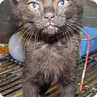 Adopt A Pet :: Sabrina - Terrell, TX