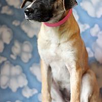 Adopt A Pet :: Urika - Waldorf, MD