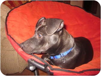 Patterdale Terrier (Fell Terrier) Mix Dog for adoption in Sheboygan, Wisconsin - Skip
