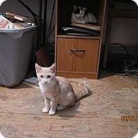 Adopt A Pet :: Poppy - Staten Island, NY