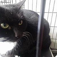 Adopt A Pet :: Samantha - East Stroudsburg, PA