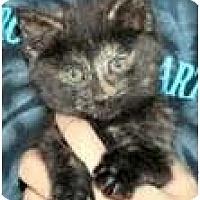 Adopt A Pet :: Raisin & Rascal - Arlington, VA