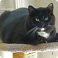 Adopt A Pet :: Toby - Victor, NY