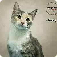 Adopt A Pet :: Mandy - Phoenix, AZ