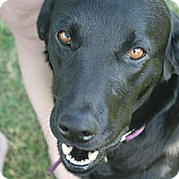 Adopt A Pet :: Sadie - Franklin, TN