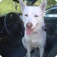 Adopt A Pet :: DESI - Malibu, CA
