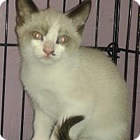 Adopt A Pet :: Casper - Whittier, CA