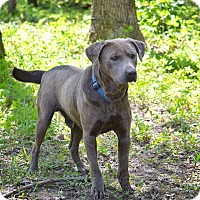 Adopt A Pet :: Sterling - Lewisville, IN