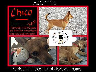 Chihuahua Mix Dog for adoption in Buckeye, Arizona - Chico