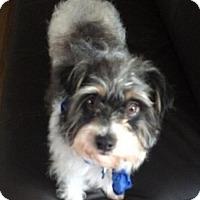 Adopt A Pet :: Willy Nelson - Seattle, WA