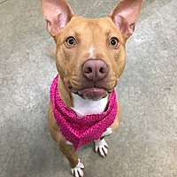 Adopt A Pet :: Hannah - Lake Odessa, MI