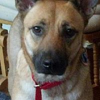 Adopt A Pet :: Gigi - Kansas City, MO
