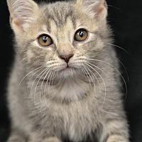 Adopt A Pet :: Frances171126 - Atlanta, GA