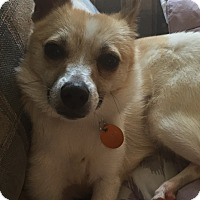 Adopt A Pet :: Shasta - Baltimore, MD