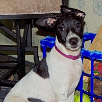 Adopt A Pet :: Pippin (VA) - Richmond, VA