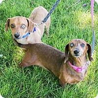 Adopt A Pet :: Stark and pepper - Ogden, UT