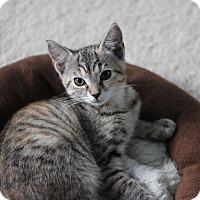 Adopt A Pet :: Fawn - Richmond, VA