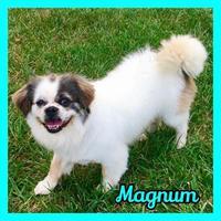 Adopt A Pet :: Magnum - Jasper, IN