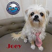 Adopt A Pet :: Joey - Arcadia, FL
