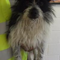 Adopt A Pet :: GUS - New Bern, NC