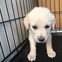 Adopt A Pet :: Mia - Aurora, CO