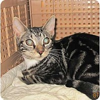 Adopt A Pet :: Cloe - Bayonne, NJ