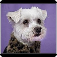 Adopt A Pet :: Miranda - Ft. Bragg, CA
