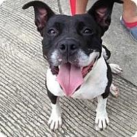 Adopt A Pet :: Dolores - Laingsburg, MI