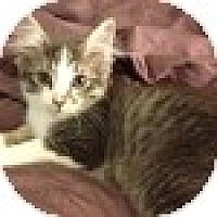 Adopt A Pet :: Nienna - Vancouver, BC