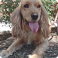 Adopt A Pet :: Freida - Sugarland, TX