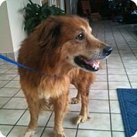 Adopt A Pet :: Erwin - Foster, RI