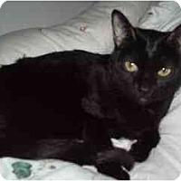 Adopt A Pet :: Kata - Scottsdale, AZ