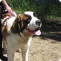 Adopt A Pet :: CHUCK - ADOPTION PENDING - Sudbury, MA