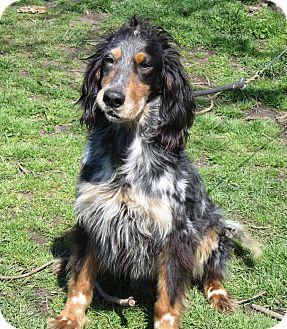 English Setter Mix Dog for adoption in Elizabeth City, North Carolina - Jake URGENT