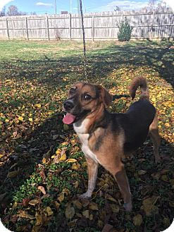 Shepherd (Unknown Type) Mix Dog for adoption in Troutville, Virginia - O'Reilly