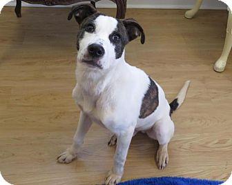 Pointer/Hound (Unknown Type) Mix Dog for adoption in High Point, North Carolina - Petey