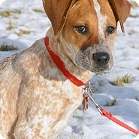 Adopt A Pet :: Cupcake - Delano, MN