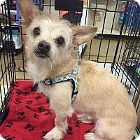 Adopt A Pet :: Ziggy - Gainesville, FL