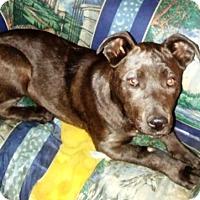 Adopt A Pet :: Roxie - Rancho Cucamonga, CA