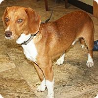 Adopt A Pet :: Token - Sparta, NJ