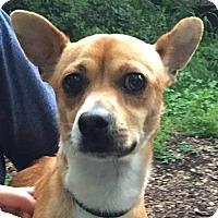 Adopt A Pet :: Collin - Orlando, FL