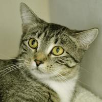 Adopt A Pet :: Jill - Evans, CO