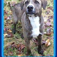 Adopt A Pet :: ERNIE - Halifax, NS