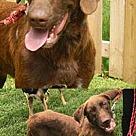 Adopt A Pet :: Audrey