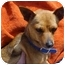 Photo 1 - Chihuahua Mix Dog for adoption in Spring Valley, California - Rusty